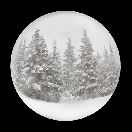 Snow globe with spruce trees in winter isolated on black. photo