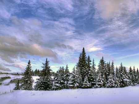Beautiful cloud patterns on an Alaskan winter day with spruce trees and snow. Stock Photo - 11773603