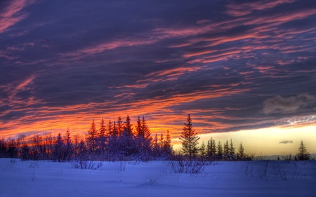 Colorful sunset with interesting cloud patters in winter with snow and spruce trees. Stock Photo - 11910689