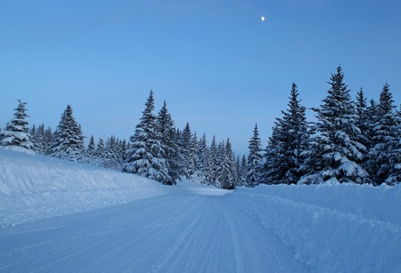 Snowy plowed road on a cold winter evening with a moon in a clear sky and spruce trees. Stock Photo