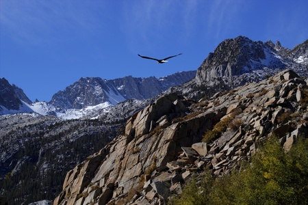 Bald eagle soaring over rocky peaks with a bright blue sky.