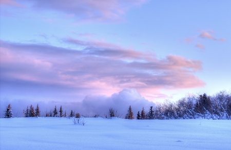 Pink clouds at sunset with puffy clouds at the horizon in winter in Alaska with snow and spruce in the foreground.