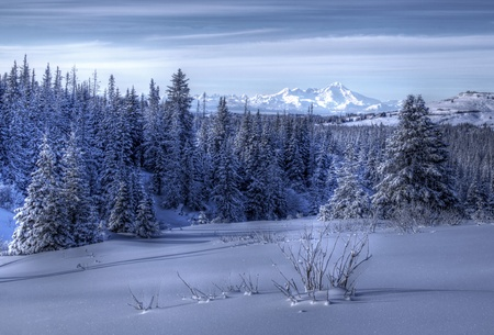 Alaskan winter landscape at dusk with snow, spruce trees, and volcanoes in the background. Stock Photo