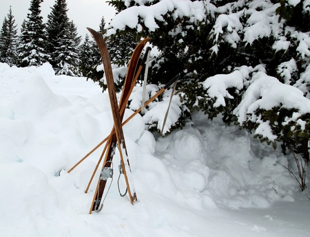 Wooden skiis in the snow near a ski path with spruce trees in the background. Stock Photo