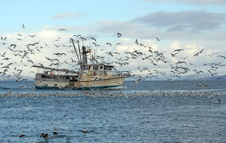 commercial fishing: Old commercial fishing trawler heading out to sea in the Kachemak Bay near Homer, Alaska in winter surrounded by seagulls and shorebirds with snowy mountains in the background.