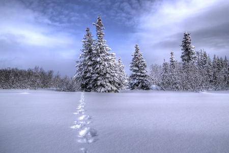 Path leading through the snow to some trees off in the distance with a bright blue sky and clouds. Stock Photo - 12539328