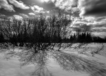 Dark shadows from a bush in the snow with dramatic clouds in black and white. photo
