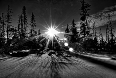 Winter scene with a sunburst and bokeh with snow and the silhouettes of spruce trees in black and white.