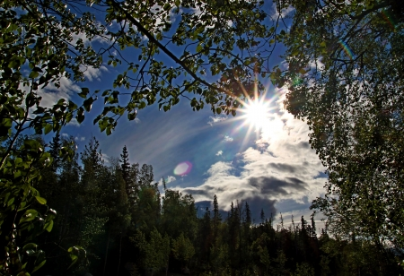 Sunburst with blue sky and clouds coming through birch trees with spruce in the background and rays of light. Stock Photo