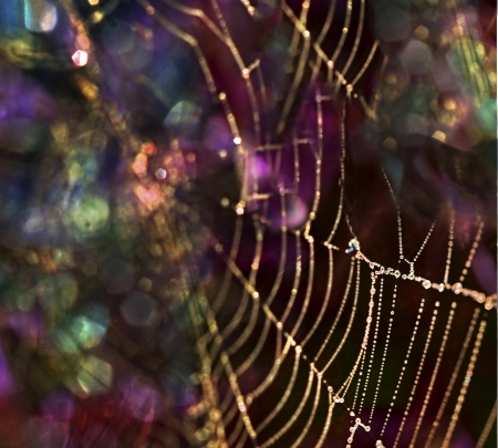 Glittering bokeh with dew drops on a spider web for a magical macro view. Stock Photo
