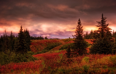 Fall sunset in rural Alaska with spruce trees and red fireweed with pink clouds.