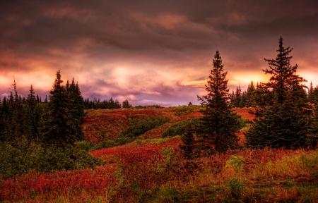Pád západ slunce ve venkovských Aljašce se smrky a červenou fireweed s růžovými obláčky.