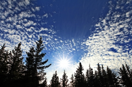 Sunburst rising from spruce trees with interesting cloud patterns. Imagens