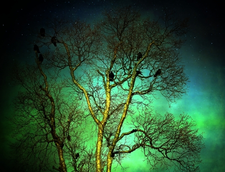 Flock of crows in a bare winter tree with a colorful sky with stars and textures for an artistic look. Stock Photo