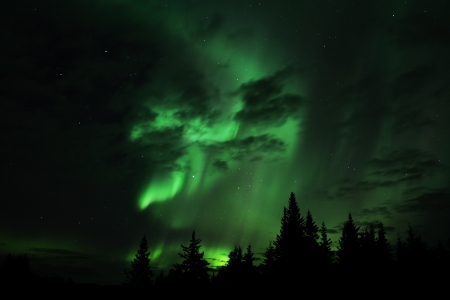 borealis: Aurora borealis in an Alaskan sky with clouds and silhouettes of spruce trees. Stock Photo