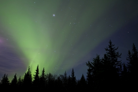 Streaming aurora borealis lights with stars and the silhouettes of spruce trees. Stock Photo