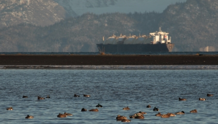 Oil tanker in the Kachemak Bay near Homer Alaska with ducks floating on the water in the foreground on a sunny day. Stock Photo