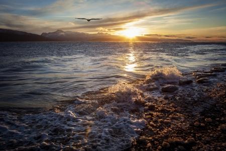 Soaring bald eagle at sunset on an Alaskan beach.