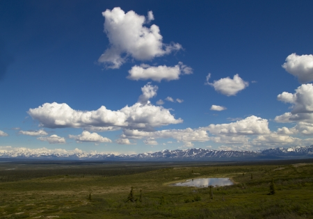denali: Views from the Denali Hwy. in Alaska in summer with puffy clouds.