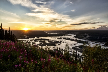 View of the Copper River in Alaska at sunset with blooming fireweed in the foreground.