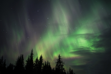 Aurora Borealis in Alaskan Skies with spruce trees and clouds.