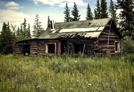 ramshackle: Abandoned Alaskan traditional cabin with fire damage in summer.