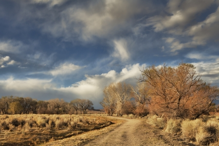 Dirt road in high desert in evening light with trees and clouds. Stock Photo