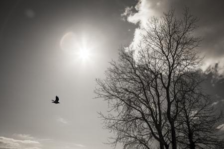 Grimmige winter berk met een zonnestraal, lens flare, kraai, en de wolk in zwart en wit.