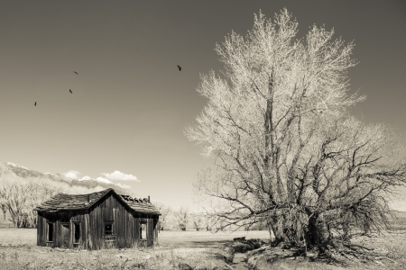 circling: Remains of an old western house with a cottonwood tree and circling birds on the eastern side of the Sierra mountains in monochrome for a vintage look  Stock Photo