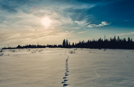 Footsteps making a path through the snow in rural Alaska with a glowing sun. photo