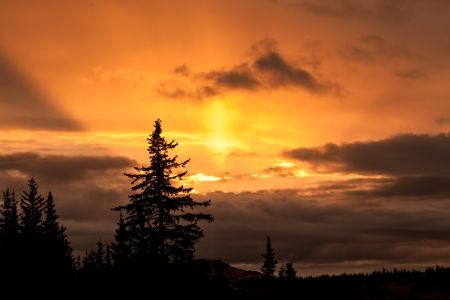 Alaskan sunset with spruce tree silhouettes and rays of light.