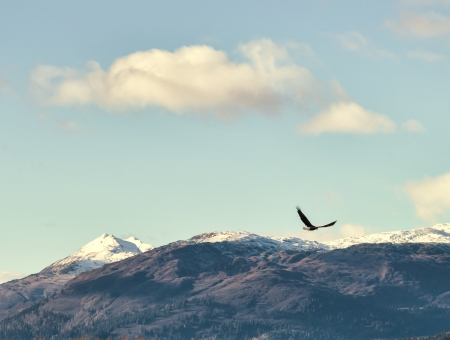 Bald eagle flying over Alaskan mountains with a blue sky and puffy clouds.