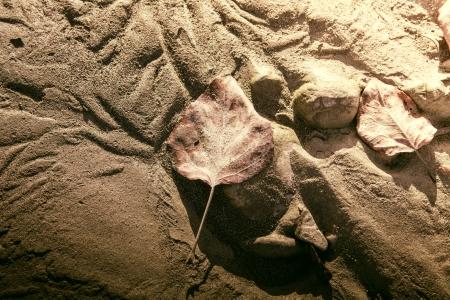 流れる川によって形成された砂のパターンで倒れた白樺を残します。