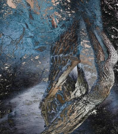 overlays: La magia del �rbol crea superposiciones de fotos para una mirada art�stica.