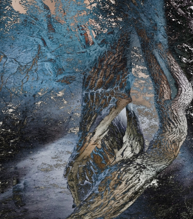 Tree magic created photo overlays for an artistic look. Imagens