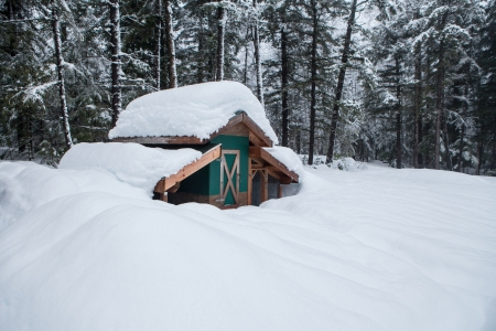Chicken coop outbuilding buried in deep snow in an Alaskan winter. Stock Photo