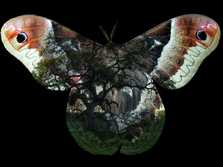 photomanipulation: Artword created by combining natural elements including a month and ancient oak trees through photo-manipulation.
