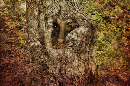 photomanipulation: Face in an ancient gnarled tree created with photomanipulation and textures.