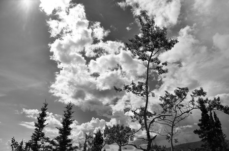 Yukon trees with clouds and sun in black and white.