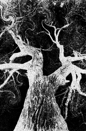 Magical tree at night in black and white. Zdjęcie Seryjne