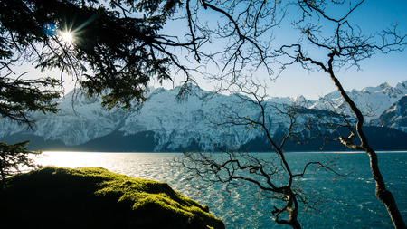 hemlock: Winter sun shining through hanging tree branches with the Chilkat Inlet in Southeast Alaska with mountains. Stock Photo