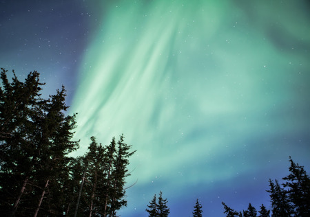 Alaskan forest with aurora borealis streaming in the night sky.