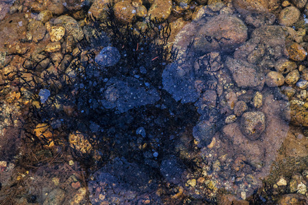 Oily film floating on the water in a river with rocks and water plants. Banco de Imagens