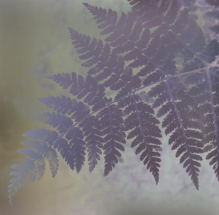 Oak fern leaf in stylized purple created with photomanipulation.