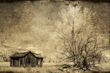 cottonwood  tree: an old western house with a cottonwood tree and circling birds on the eastern side of the Sierra mountains in monochrome with textures added for a vintage look. Stock Photo
