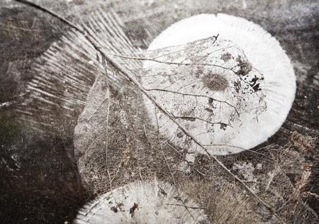 sporen: Blatt Skelett mit auf einen Spiegel mit Texturen f�r einen k�nstlerischen Blick angeordnet Pilzsporenabdr�cken.