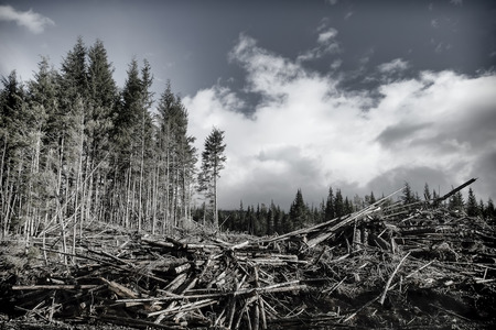 forest products: Clearcut logging on the Cassiar Highway in British Columbia, Canada.