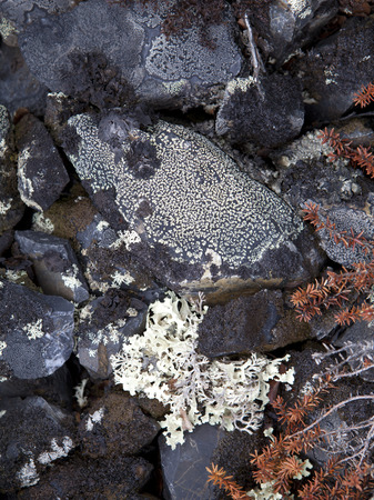 elevation: Lichens on rock in high elevation mountains