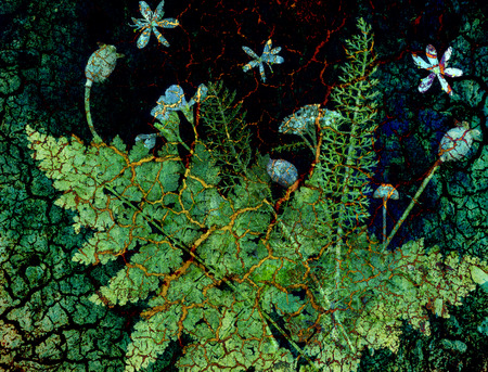 yarrow: Botanical elements such as ferns and flowers overlayed with cracked earth for a surrealistic effect.