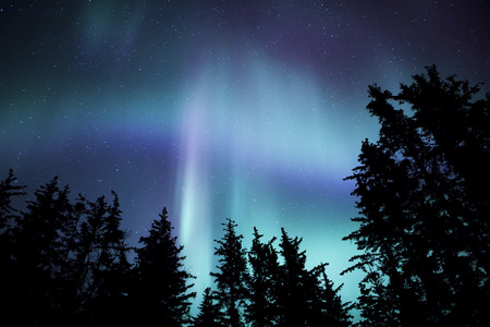 Northern lights in Southeast Alaska with the silhouette of spruce trees.